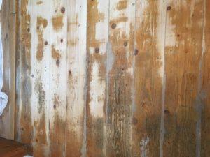Pine Floor Restoration County Durham Absolute